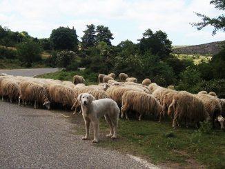 sheep-1202737_960_720